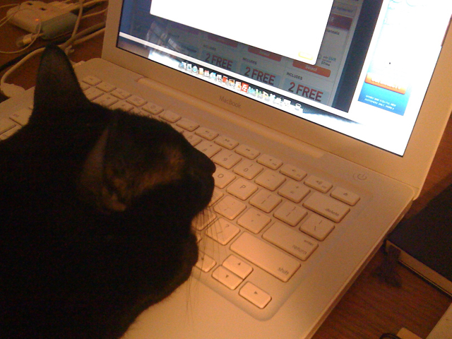 cat with chin and paw on keyboard