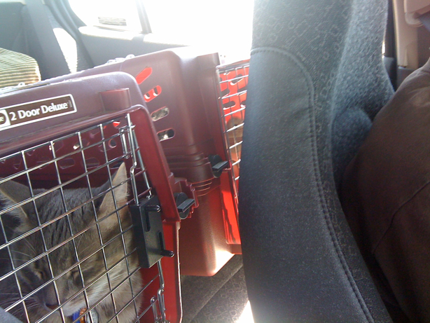 cat carriers in backseat of car