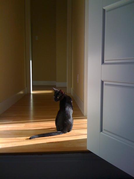 kitten sitting in hallway of empty house
