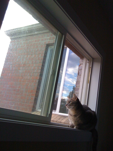 cat looking out window at sky