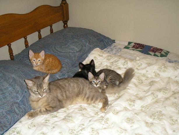 mama cat and three kittens