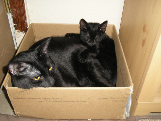 cat and kitten in cardboard box