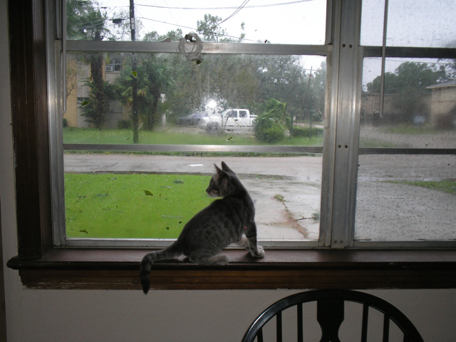 cat looking out window at storm