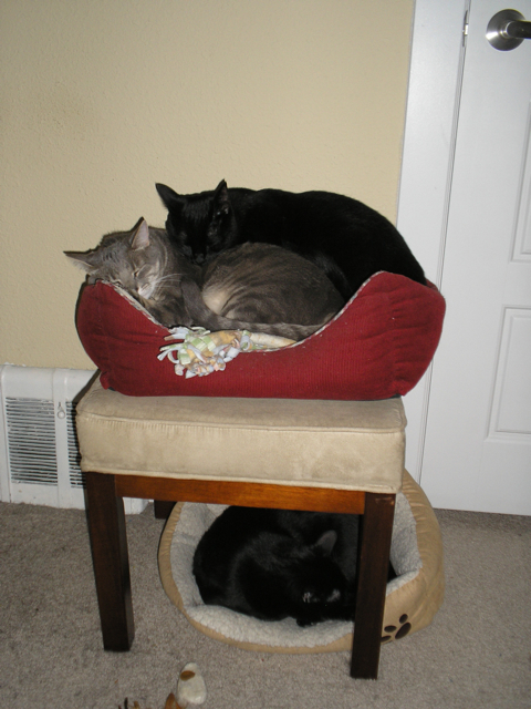 cat on top of cat in bed