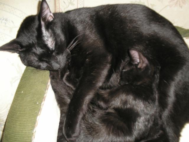 Hamlet cuddling with Tristan