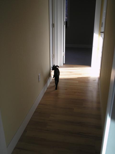 cat in hallway