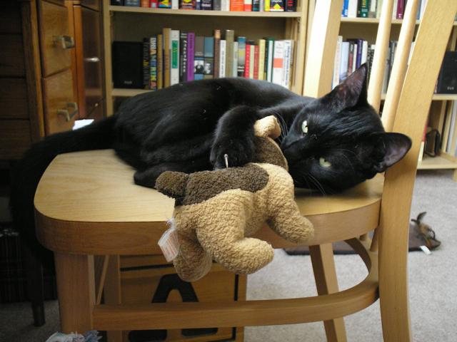 cat with toy dog