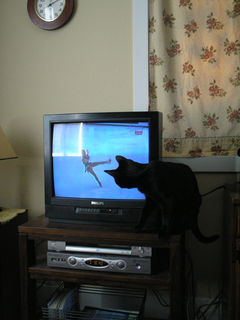 cat blocking TV
