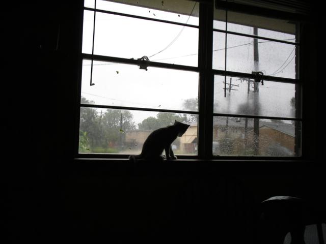 kitten looking out window at storm
