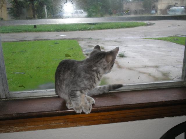 kitten, window, wet driveway