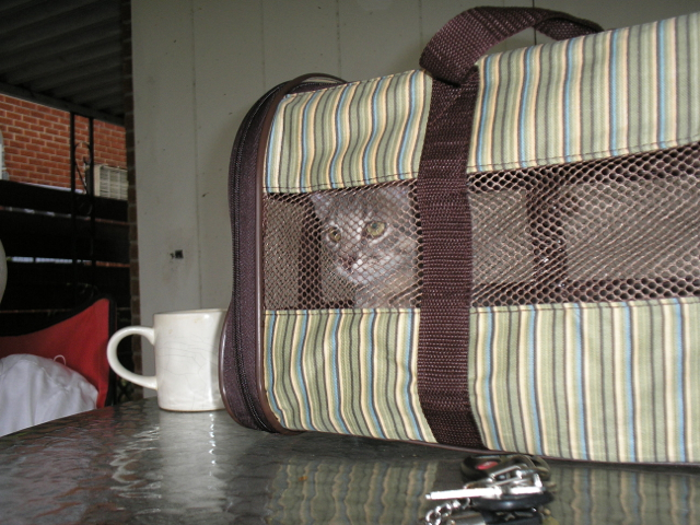 kitten in cat carrier on table