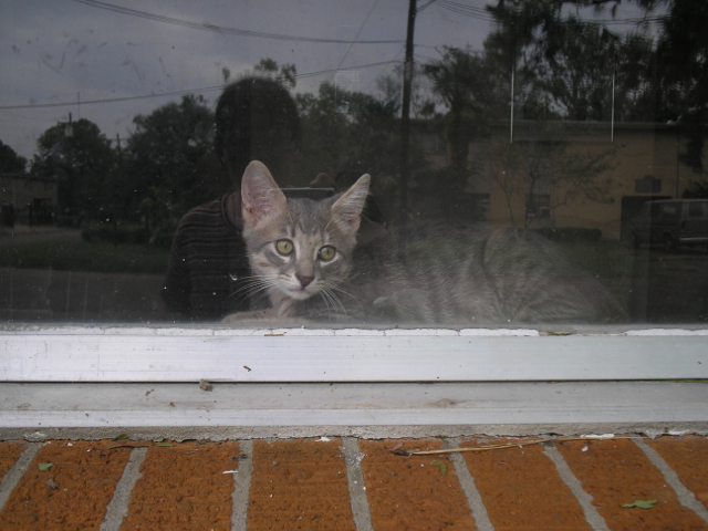 view of kitten through window