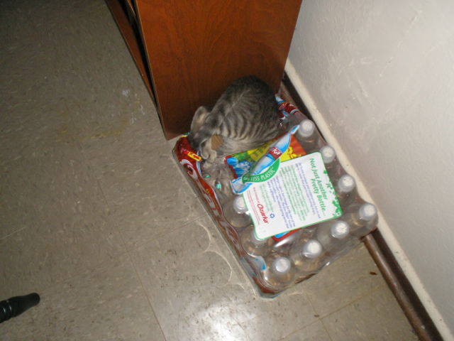 kitten face in case of bottled water