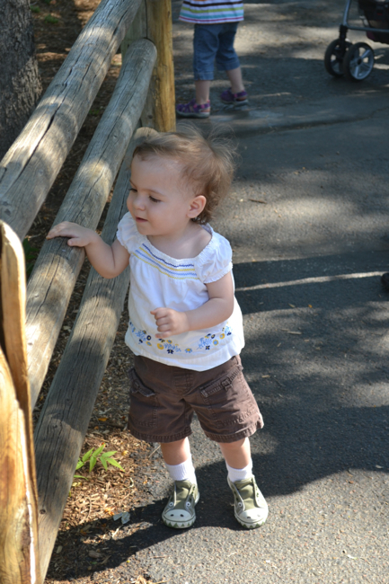 toddler at zoo